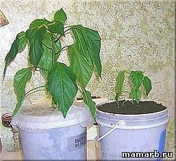 Гидрогель для выращивания рассады 60